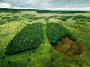 Dal 2000 disboscate oltre 1 milione di foreste vergini