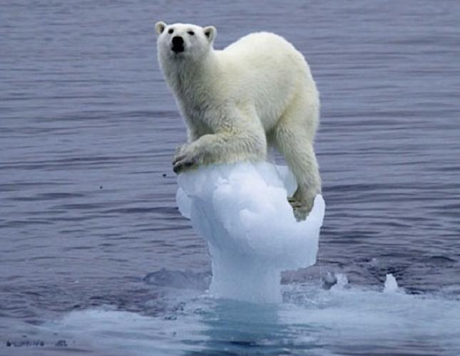 Emanuele Bompan, serve essere l'orso sui ghiacci