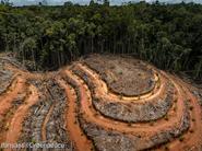 Greenpeace: L'Europa deve smettere di importare deforestazione!